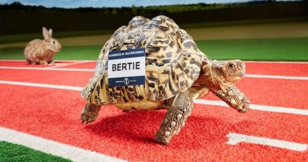 Αυτή η χελώνα σίγουρα θα κέρδιζε το λαγό (Βίντεο)