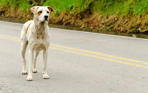 Πως να αντιμετωπίζεις τα αδέσποτα σκυλιά που συναντάς στην βόλτα σου – Ειδικά αν φοβάσαι