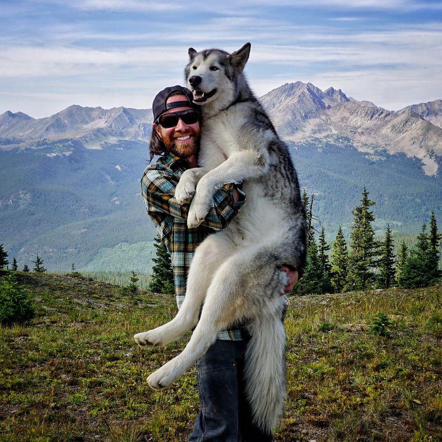 λυκόσκυλος