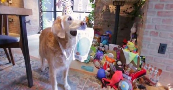 Ένας άγνωστος ήρωας της 11ης Σεπτεμβρίου – Ο σκύλος διασώστης (Εικόνες)