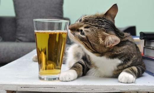 Μια γάτα που τη λένε Μπύρα (Εικόνες)