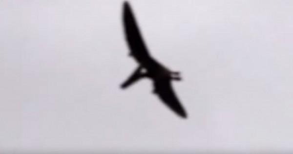 Πραγματικός δεινόσαυρος ή φάρσα; Βίντεο «δείχνει» πτερόσαυρο πάνω από το Άινταχο των ΗΠΑ (Βίντεο)
