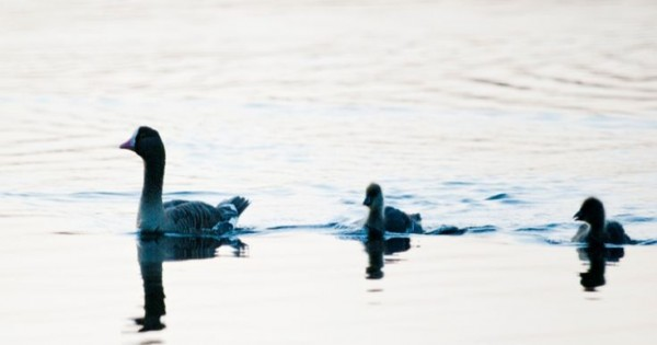 Ελπίδα για το πιο απειλούμενο πουλί της Ευρώπης