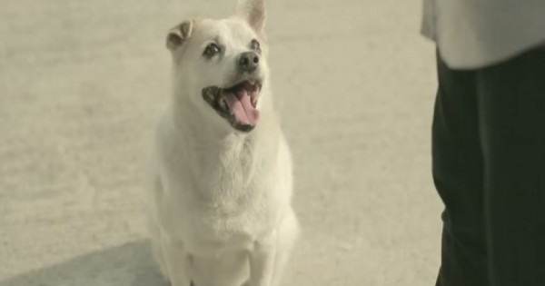 Ένας άντρας ταΐζει ένα αδέσποτο σκυλί. Ο τρόπος που του το ανταποδίδει, ξεπερνά κάθε προσδοκία! (Βίντεο)