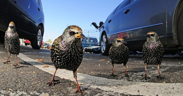 Η «άγρια» ζωή της Βρετανίας όπως δεν την έχουμε ξαναδεί (Εικόνες)