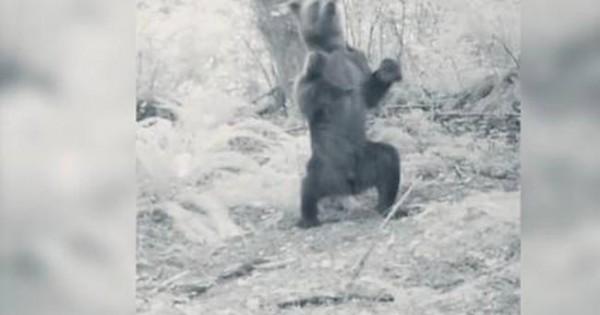 Αρκούδα ξεσαλώνει ντίρλα στο… μεθύσι! (video)
