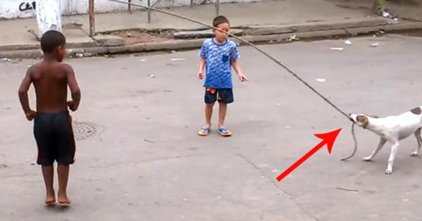 Είναι πραγματικά απίστευτο αυτό που έκανε αδέσποτος σκύλος όταν είδε αυτά τα παιδιά να παίζουν (Βίντεο)