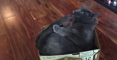 Η γάτα επιτίθεται στην ουρά της (Βίντεο)