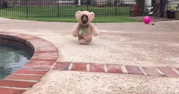 Scrappy: Ο σκύλος που κέρδισε το διαγωνισμό καλύτερου κουστουμιού! (Βίντεο)
