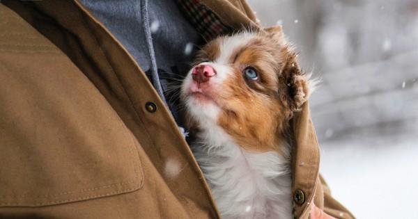«Θεέ μου, βοήθησε με να γίνω ο άνθρωπος που το σκυλί μου νομίζει ότι είμαι!» (Εικόνες)