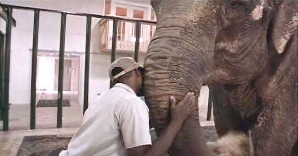 Ελέφαντας αφήνεται ελεύθερος μετά από 50 χρόνια αιχμαλωσίας (Βίντεο)