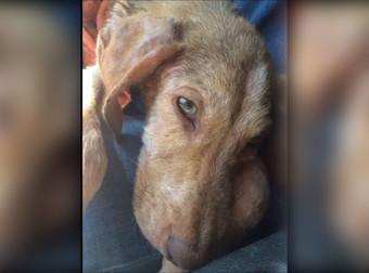 Παράτησαν αυτό το σκυλάκι στη μέση του πουθενά, αλλά η κατάληξή του θα σας κάνει να κλάψετε από χαρά! (Βίντεο)