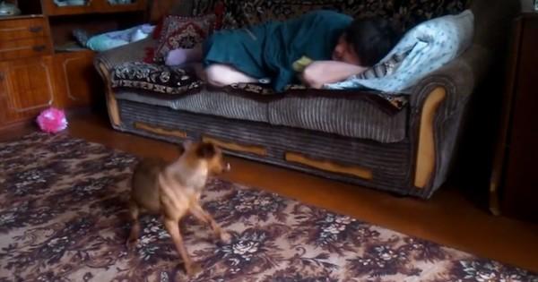 Θέλει αγάπη και θα κάνει τα πάντα για να την πάρει! (Βίντεο)