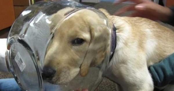 28 αξιολάτρευτοι σκύλοι που πήραν λάθος και βιαστικές αποφάσεις (Εικόνες)