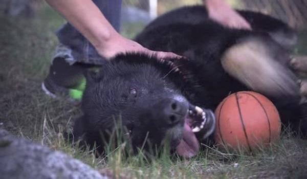 Ηρωικό σκυλί κρατάει για 40 ώρες ζωντανό ένα μικρό αγόρι, μετά από σφοδρό τροχαίο ατύχημα. (Βίντεο)
