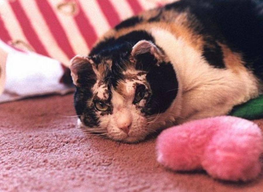 Кішка заходила в палаючий будинок 5 разів, щоб винести кожного свого малюка