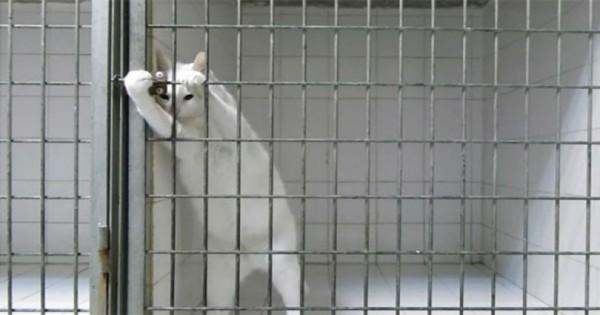 Η πονηρή γάτα που άφησε άφωνο όλο το internet με την απόδρασή της! [video]