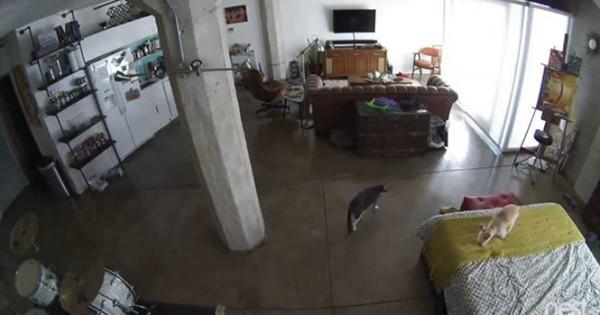 Δείτε πως αυτή η γάτα έκανε τον σκύλο να σταματήσει το γάβγισμα (Video)