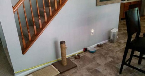 Ιδιοκτήτης κατοικιδίου έφτιαξε το τέλειο σκυλόσπιτο! Ούτε παιδικό δωμάτιο δεν είναι έτσι!! (Εικόνες)