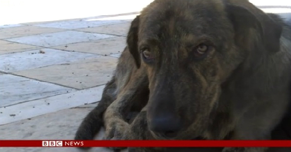 Περισσότερα από 1 εκατ. αδέσποτα σκυλιά θύματα της ελληνικής κρίσης – Συγκλονιστικό ρεπορτάζ του BBC (Βίντεο)