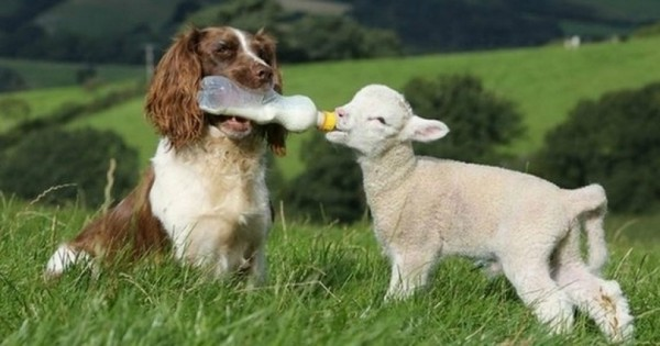 21 αταίριαστες αλλά υπέροχες φιλίες μεταξύ ζώων (Εικόνες)