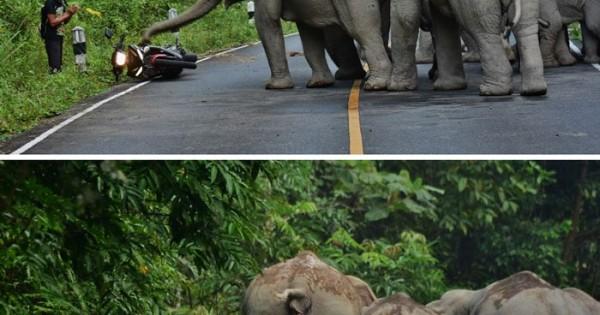 Ο άνθρωπος αυτός ζητά συγνώμη στους ελέφαντες που τους ενόχλησε με την μοτοσυκλέτα του.