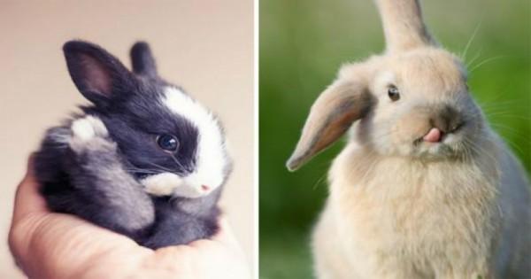 20 Από τα πιο χαριτωμένα κουνελάκια που είδατε ποτέ. (Φωτογραφίες)