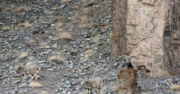 Μπορείτε να εντοπίσετε τη λεοπάρδαλη; (Εικόνες)