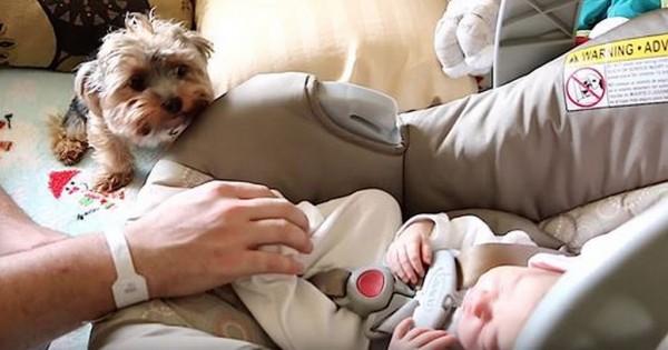 Ένα νεογέννητο μωράκι και ένα σκυλάκι ράτσας Yorkie συναντιούνται για πρώτη φορά! (Βίντεο)