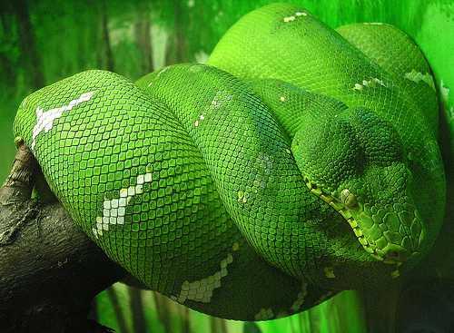 φίδια
