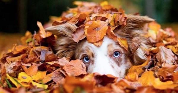 18 εκπληκτικές φωτογραφίες ζώων που απολαμβάνουν το Φθινόπωρο!