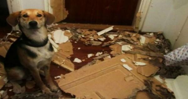 Άτακτα κατοικίδια Μετά την καταστροφή…! (Εικόνες)