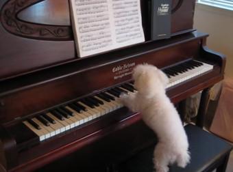 Βίντεο: Απολαύστε τον σκύλο – Μπετόβεν