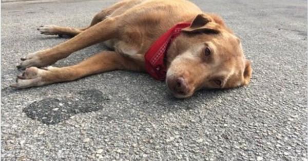 Συγκινητική εικόνα: Σκυλί μένει επί ώρες ξαπλωμένο στον τόπο που βρήκε τον θάνατο το αφεντικό του