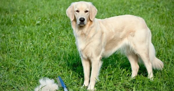 Ούτε τρίχα χαμένη! 6 πρακτικές χρήσεις για τις τρίχες του σκύλου ή της γάτας σας που αξίζει να δοκιμάσετε. (Βίντεο)