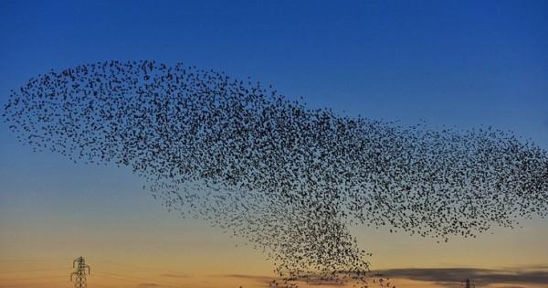 Όταν τα πουλιά «ζωγραφίζουν» στον ουρανό (Φωτογραφίες)