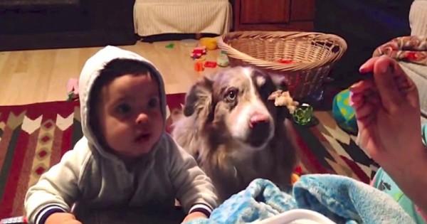 Προσπαθεί να κάνει το παιδί της να πει «Μαμά». Προσέξτε την αντίδραση του σκύλου! (Βίντεο)