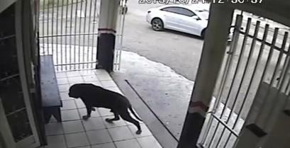 Ο πιο τυχερός σκύλος στον κόσμο (Βίντεο)