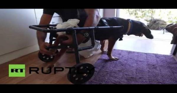 Ο Έλληνας υδραυλικός που δίνει χαρά σε ανάπηρα σκυλιά [βίντεο]