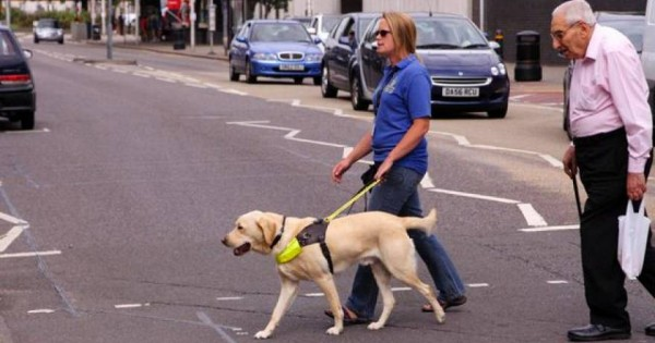 Η ιστορία των σκύλων οδηγών