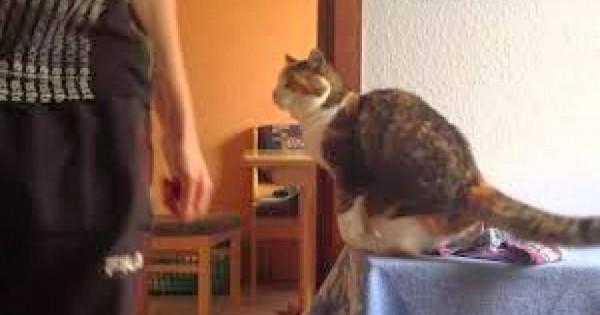 Γάτα υποδέχεται τον ιδιοκτήτη της με τον δικό της μοναδικό τρόπο [video]