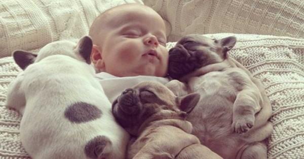 25 ενδείξεις ότι κάθε άτομο χρειάζεται πραγματικά έναν σκύλο στη ζωή του (Εικόνες)