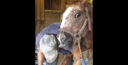 Το άλογο λατρεύει τον πεταλωτή (Βίντεο)