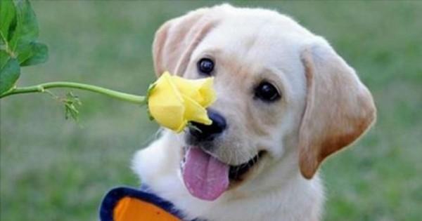Τα 35 πιο χαρούμενα ζώα που έχετε δει! (Φωτογραφίες)