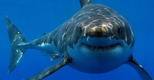 Οι καρχαρίες αγαπούν τη… heavy metal (Βίντεο)