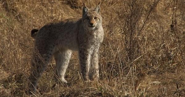 «Παράδεισος» για την άγρια ζωή το Τσέρνομπιλ (Εικόνες)