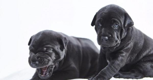 Αυτά είναι τα πιο σπάνια κουτάβια του κόσμου (Εικόνες)