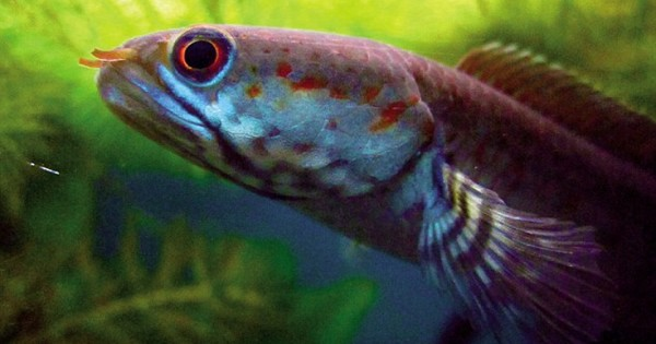 Νέα εντυπωσιακά είδη ζωής που ανακαλύφθηκαν την τελευταία πενταετία (Εικόνες)