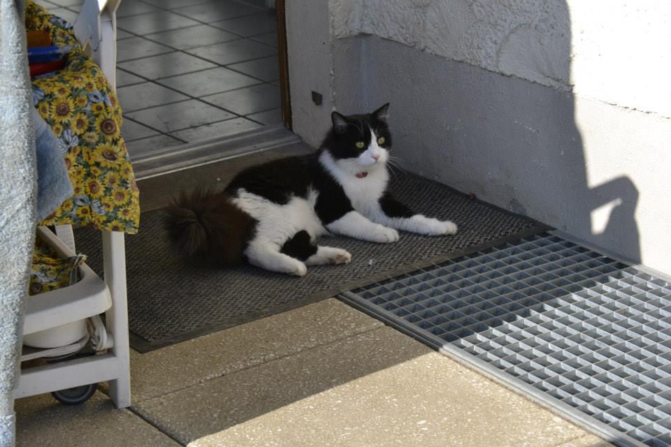 γάτος