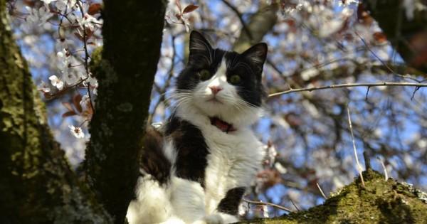 Γάτος ταξίδεψε Αθήνα-Ζυρίχη στη ρόδα αεροπλάνου και επέζησε (Εικόνες)